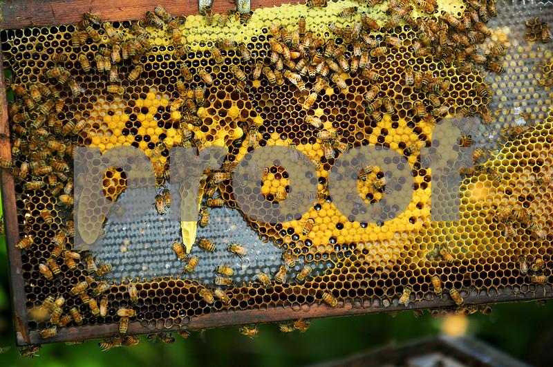 dnews_0610_Bees1