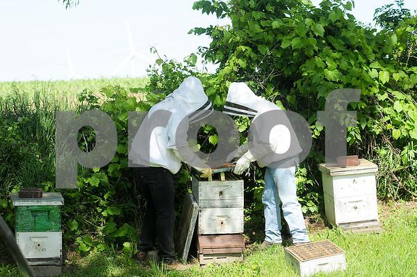 dnews_0610_Bees4