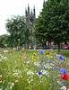 Wildflowers, Newcastle