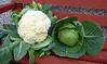 Cauliflower and cabbage from the Dufftown garden