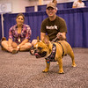 2015 Houston World Series of Dog Shows All-Breed Weight Pull Competition