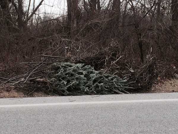 2/2/2015, Jon Merryman, Patapsco River Watershed, Baltimore County, Hammonds Ferry Rd, Christmas tree and yard waste found on the side of the road.  Pic 1 of 2.  Weight not recorded.
