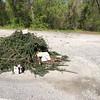 4/28/2015, Jon Merryman, near 841 Hammonds Ferry Road, collected dumped yard waste.  Estimated weight 30 pounds.