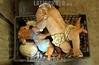 Mexico - Oaxaca - 01/02/2015 Don Felix Morales lleva 27 años dedicandose a la reparacion y moldeando nuevos niños dios y cualquier figura de la grey catolica. En Pueblo Nuevo agencia municipal de Oaxaca se encuentra su taller donde su familia se involucra para dar nueva vida a los niños que por años han permanecido en familias de Oaxaca. Aunque este año no era lo que esperaba en ventas no se da por vencido y espera que las cosas se compongan en en Estado.  Con distintos moldes de todos los tamaños Don Felix realiza obras de arte para restaurar las figuras que son valiosas para las personas sobre todo las que ha permanecido por generaciones / Don Felix Morales repaired in his workshop in Oaxaca Nativity Figurines / Mexiko : Don Felix Morales repariert seit 27 Jahren in seiner Werkstatt in Oaxaca Heiligenfiguren - Christkind - Jesuskind - Jesus - Römisch - katholische Kirche - Handwerk © Jorge Luis Plata/LATINPHOTO.org