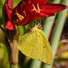 2015092615 CCC yellowbutterfly-moon-catfish