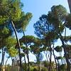 Borghese Garden, Rome