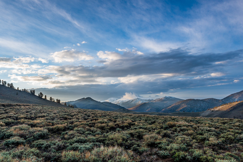 Storm Clouds in the Bristlecone Forest