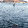 2017-07-27  Seal swimming by
