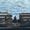 2017-07-27  Zoomed in on the Seals