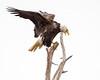 When the eagle cries