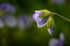 Tiny Flowers 1