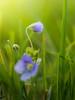 Tiny Flowers 2