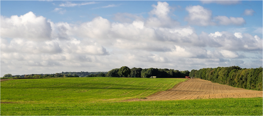 DPC #271 'Pastoral Landscapes'