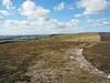 Mormond Hill - Hunter's Lodge on skyline. Wednesday 12th September.