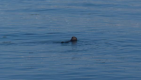 20180210 Monterey Bay Whale Tour