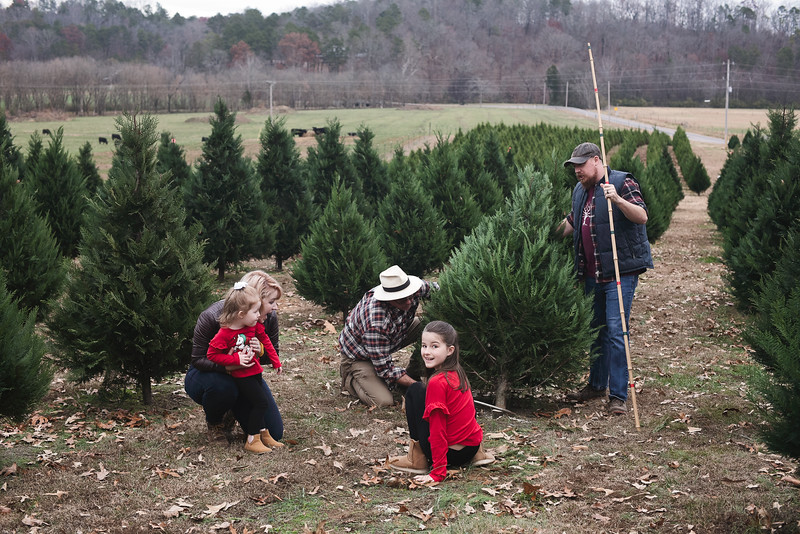 2019-Santa-and-Christmas-Trees-16