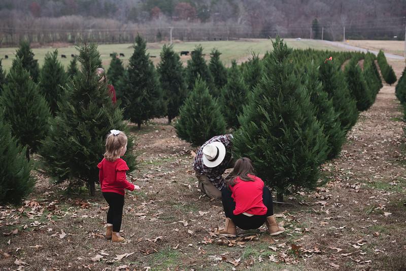 2019-Santa-and-Christmas-Trees-15