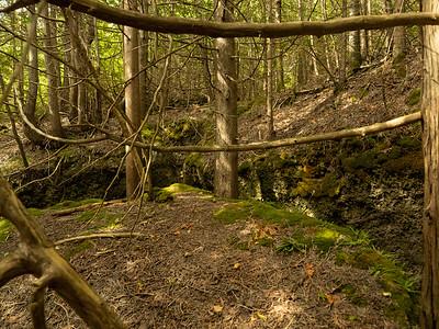 Rural Rootz Nature Reserve