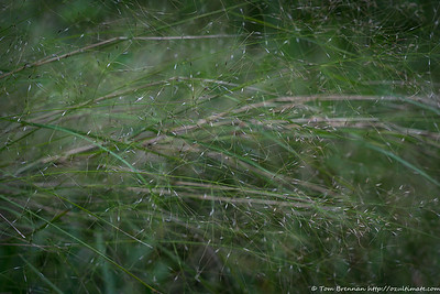 Mystery grass 4 (??)