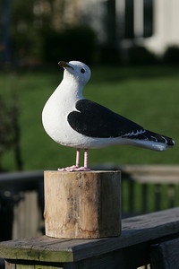 Statue of Great Black Backed Sea Gull. photo by Ray Riedel