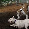 CHASE (greyhound), POWDER 6