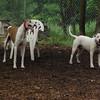 CHASE (greyhound), POWDER 5