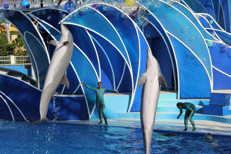 Day 14:  Movement, dancing dolphins at San Diego's Seaworld.
