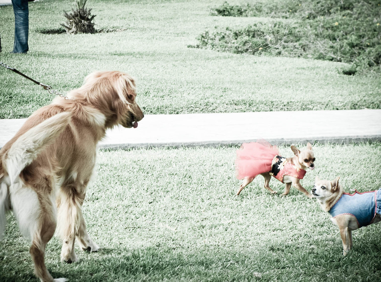 Day 7: Something funny, walking by my house caught these dogs playing at the park, when one turned around to get playful when a little dog on a red dress, and apparently her friend didn't appreciate it.  Thought it was funny!