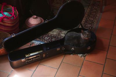 La grande-mère des chats dans le coffre du banjo.  Tous les chats font de même partout.