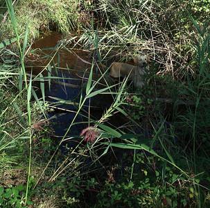 Détail de la photo précédente.  Swing, le chien de Laurent et de Véro, adore l'eau.  Dès qu'il en voit il se précipite dedans.  Il faut dire qu'il a les 'orteils' palmés.