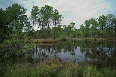 Les étanges autour Hostens.  Un peu avant j'ai vu s'envoler un couple de huppe fascié.  Je suis très content car Catou ne les a pas vus.  Aha!