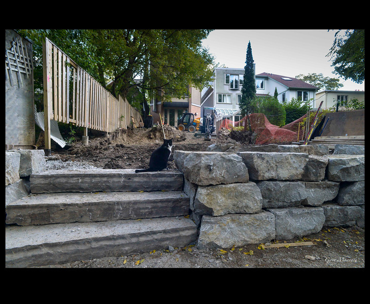 Day 12- The lower stairs have started to appear but Tilley remains unimpressed.