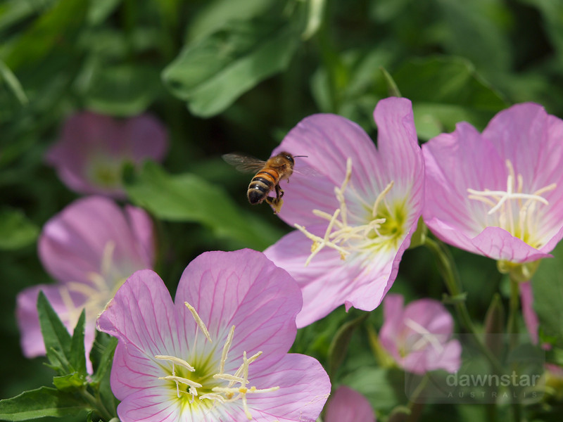 "<A HREF=""http://www.dawnstar.id.au/photography/365-before-thirty/day-54-busy-bee/"">Day 54 – Busy Bee</A>"