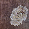 "<A HREF=""http://www.dawnstar.id.au/photography/365-before-thirty/day-71-lichen-lot/"">Day 71 – Lichen It A Lot</A>"