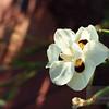 """<A HREF=""""http://www.dawnstar.id.au/photography/365-before-thirty/day-2/"""">Day 2 - Wild Flower</A>"""