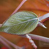 "<A HREF=""http://www.dawnstar.id.au/photography/365-before-thirty/day-87-turn-leaf/"">Day 87 – Turn Over A New Leaf</A>"