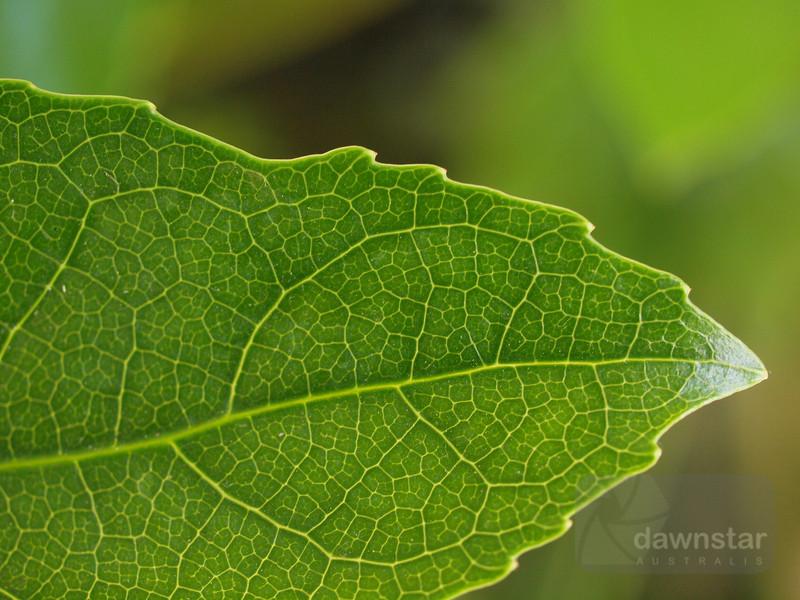 """<A HREF=""""http://www.dawnstar.id.au/photography/365-before-thirty/day-81-chlorophyll-highways/"""">Day 81 – Chlorophyll Highways</A>"""