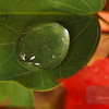 """<A HREF=""""http://www.dawnstar.id.au/photography/365-before-thirty/day-100-surface-tension/"""">Day 100 – Surface Tension</A>"""