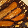 "<A HREF=""http://www.dawnstar.id.au/photography/365-before-thirty/day-69-dried-wing/"">Day 69 – Dried Wing</A>"