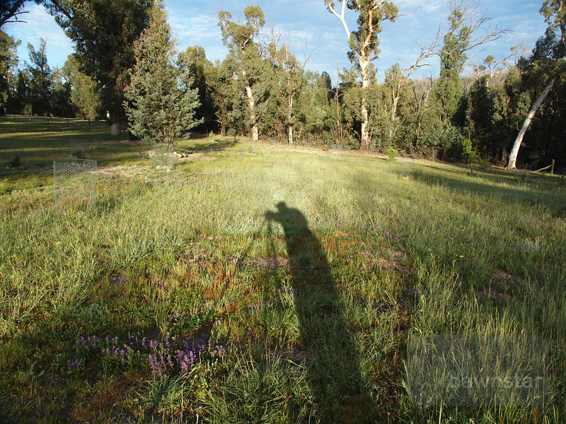"<A HREF=""http://www.dawnstar.id.au/photography/365-before-thirty/day-82-shadow-walker/"">Day 82 – Shadow Walker</A>"