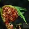 "<A HREF=""http://www.dawnstar.id.au/photography/365-before-thirty/day-17-triffid/"">Day 17 – Triffid</A>"
