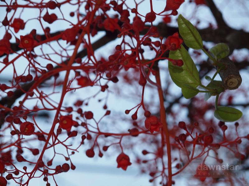 """<A HREF=""""http://www.dawnstar.id.au/photography/365-before-thirty/day-14-neuron-tree/"""">Day 14 – Neuron Tree</A>"""