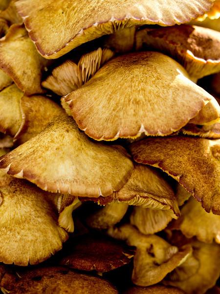 Day 3  Fungus