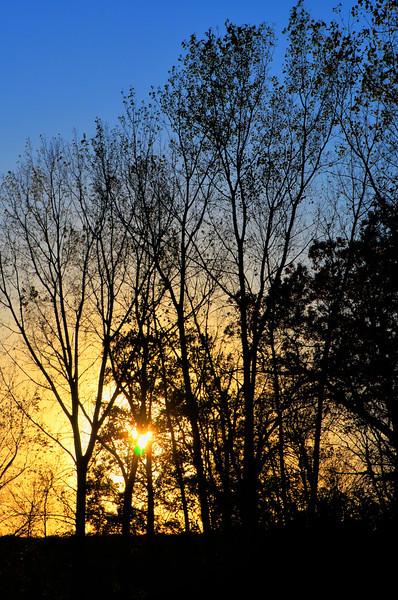 288/365-Silhouette Sunset