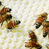 205/365 Making honey