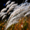 254/365-Blowing in the wind