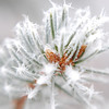 35/365-Frosty morning