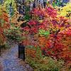 279/365-Colorful path