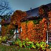 298/365-Ivy house