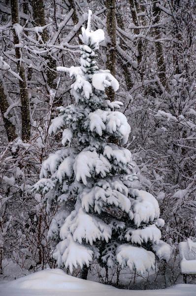 344/365-Snowy Minnesota